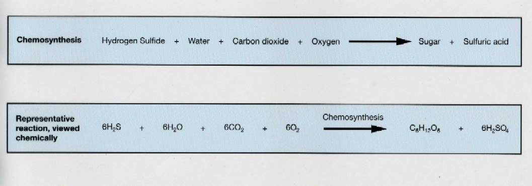 Chemical reaction chemosynthesis