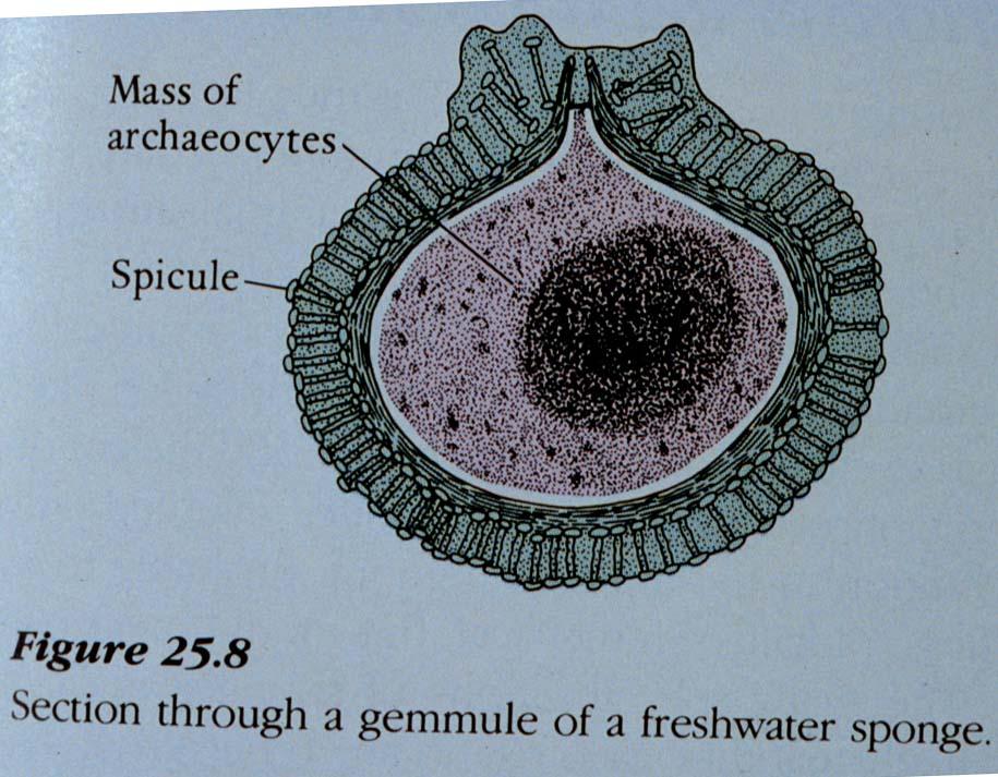 Freshwater Life  Porifera  Cnidaria  Platyhelminthes  Rotifera  Nematoda
