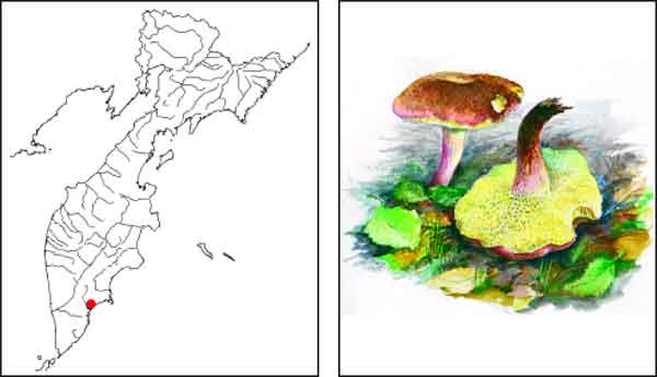 Микроорганизмы грибы