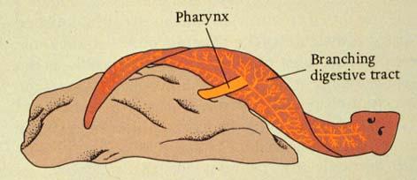 A Flatworms Diet Blog: Basic Informatio...